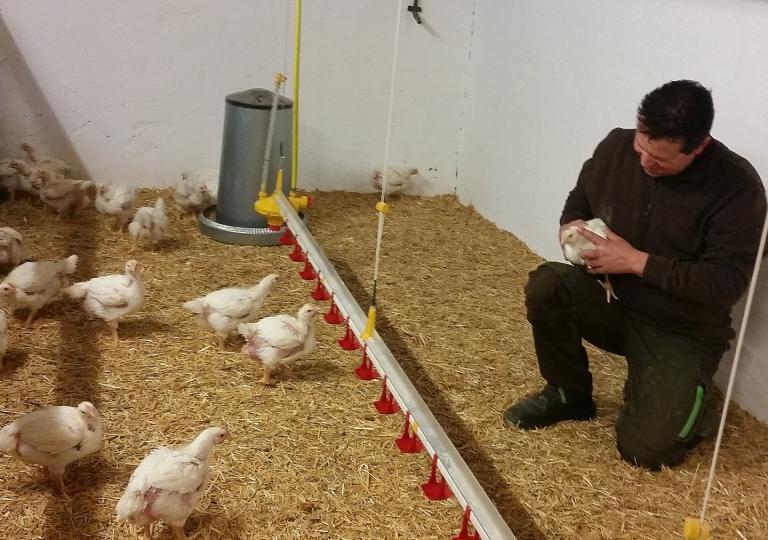 Alles vom Huhn und Hähnchen